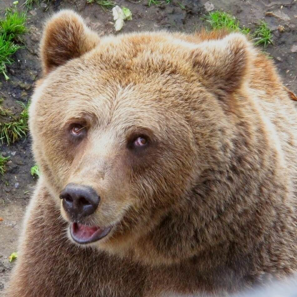 A cute and funny bear