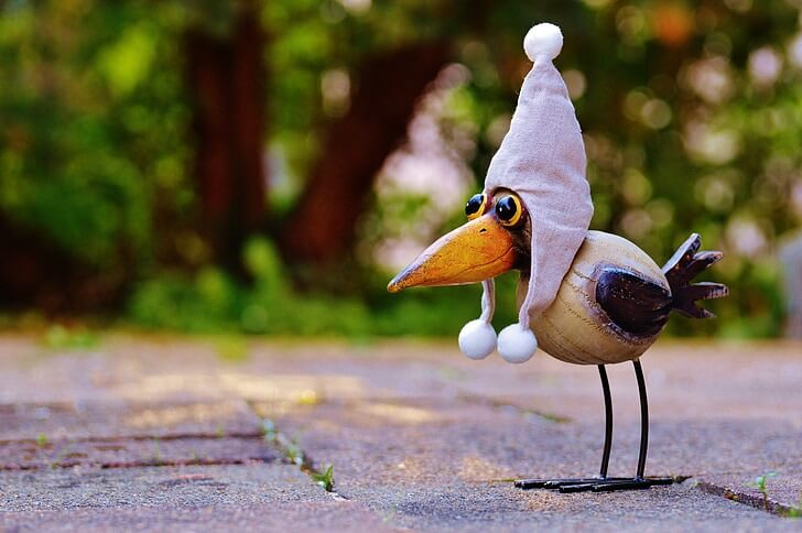 A funny bird in a hat