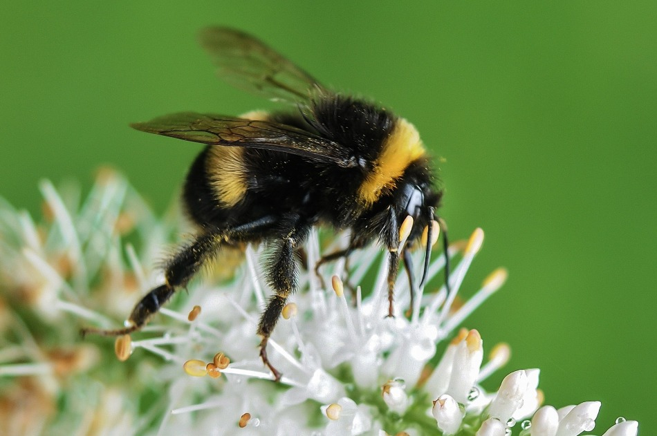 A cute and funny bee