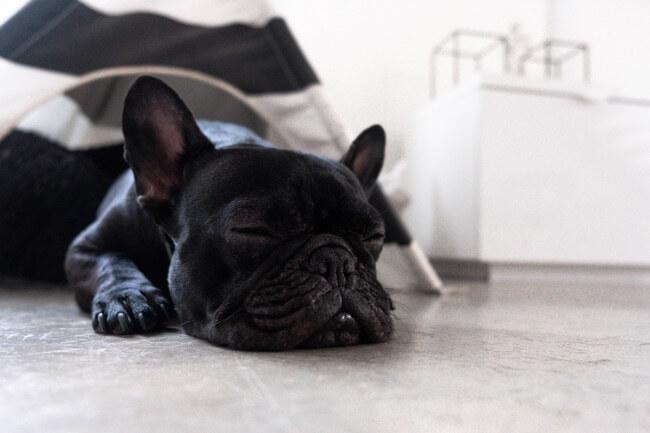 A funny animal sleeping on the floor