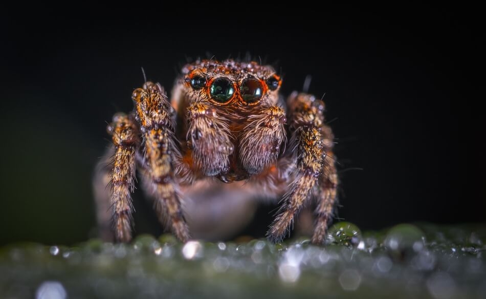 A spider that gives you ideas for puns or jokes