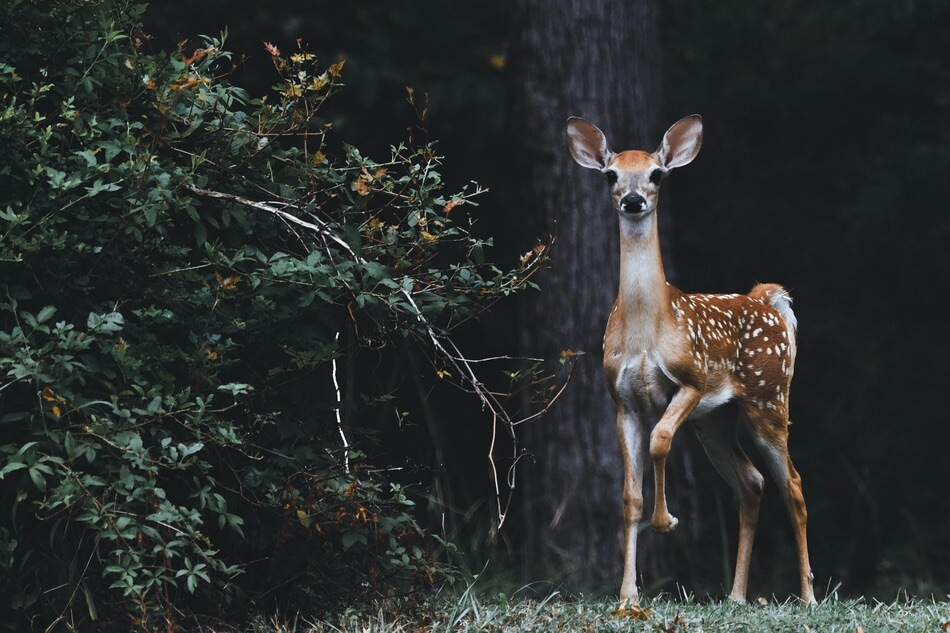 A deer being photographed by someone reciting deer puns and jokes