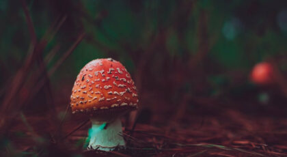 A small mushroom that makes great inspiration for mushroom puns and jokes